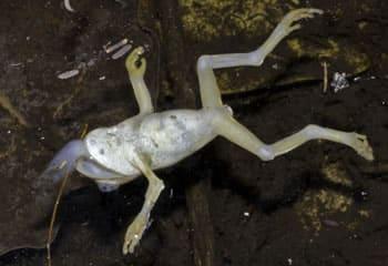dead_frog