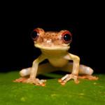 IMGP5621 The Biodiversity Group