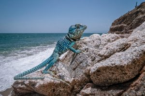Dickersons Collared Lizard (Crotaphytus dickersonae)