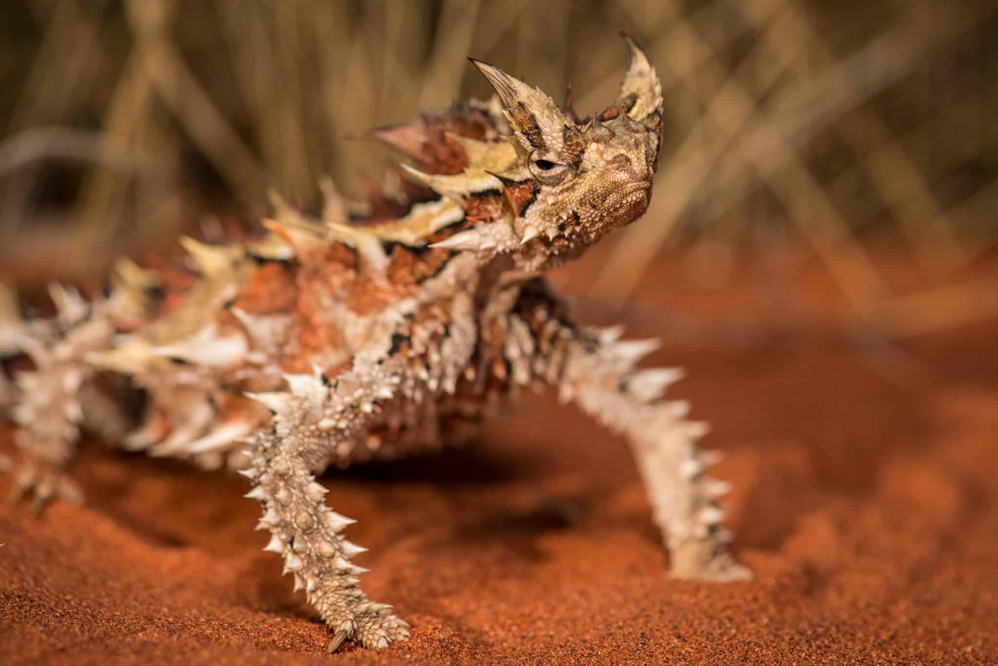 Sauria: Lizards