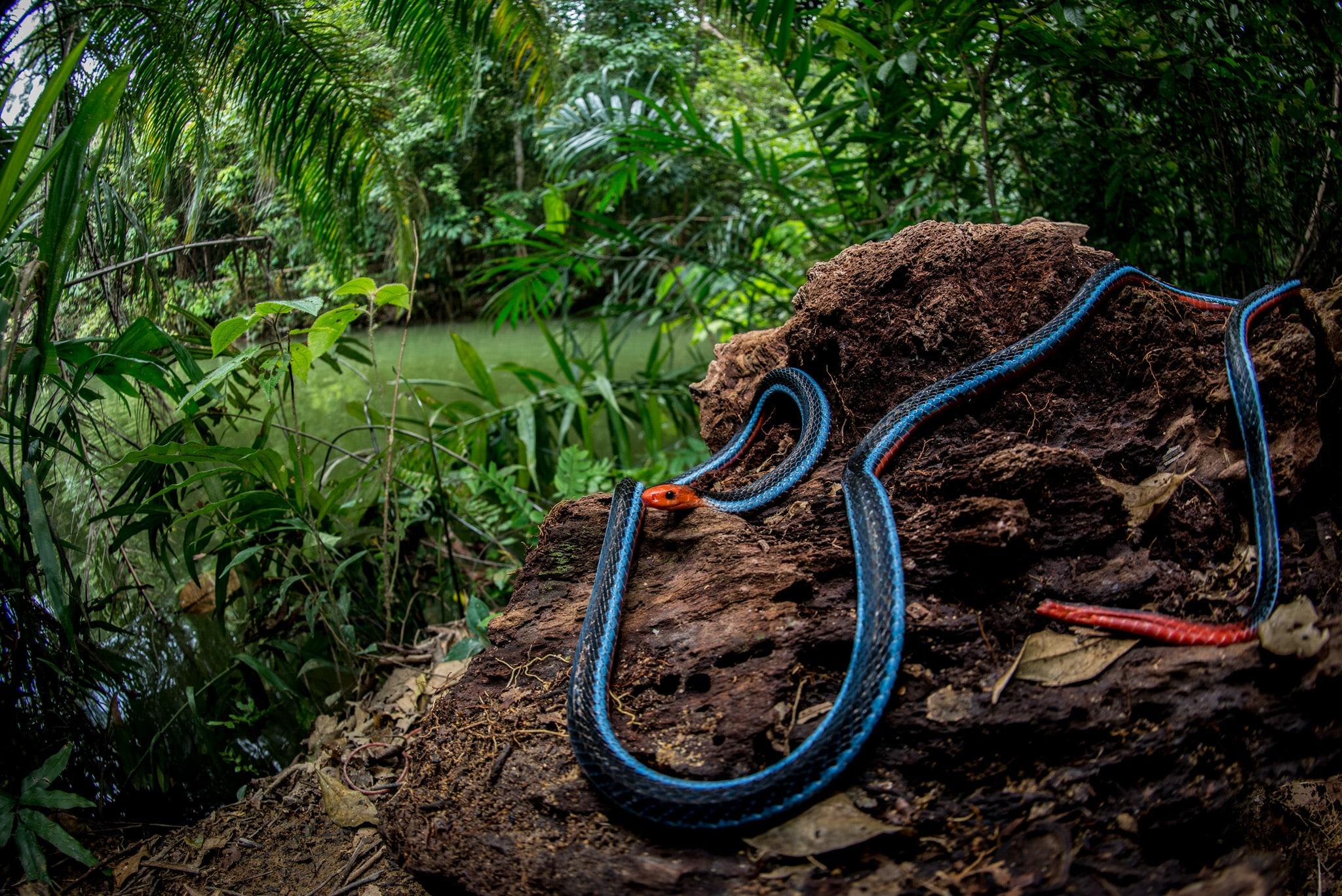 Serpentes: Snakes